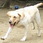 DOG グループのロゴ